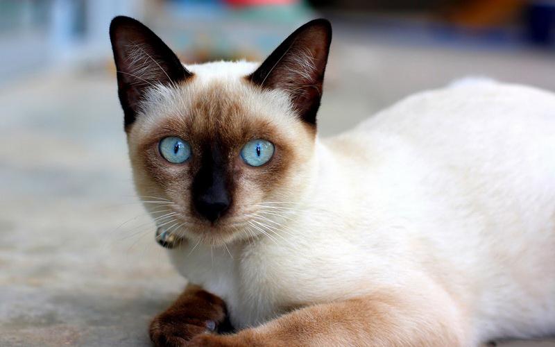 m-town-Cat Wichian Mas-s